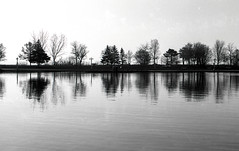 Trees of Ashbridge's Bay, Toronto (ocarmona) Tags: ashbridgesbay beaches lakeontario pond water reflection trees canon fd 50mm 14 f14 ssc hc110 blackandwhite monochrome bw filmphotography 2019