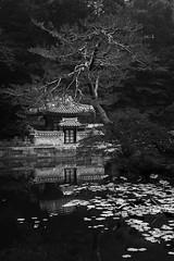 Huwon Garden, Changdeokgung Palace (jasoncremephotography) Tags: seoul korea blackandwhite monochrome leica leicasl sl