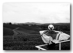 Looking.... (natureflower photography) Tags: looking tea plantation lady monochrome cloudyday wave scarf bw landscape windy balcony