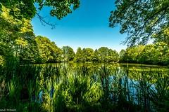 Am Karpfenteich (Andi Fritzsch) Tags: teich pound pond wasser water natur nature naturephotography landschaft landscape landscapephotography baum tree trees himmel blauerhimmel sky blusky nikon sigma nikond7100 sigma1020mm