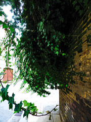 A Wall of Brick and Waves of Ivy (Steve Taylor (Photography)) Tags: garage doors drain manholecover digitalart street road wall path pavement brown green black white brick uk gb england greatbritain unitedkingdom london leaves ivy curve lines