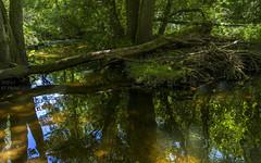 At the Schaichbach near Dettenhausen (KF-Photo) Tags: 1610 bach bachlauf baumstämme creek dettenhausen idyll idylle offenblende reflections schaichbach schaichbachtal sonnenreflexionen spiegelungen stillruhtderbach