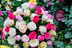 Roses (.John Wong) Tags: