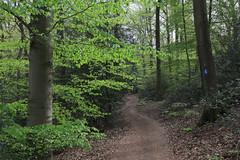 Germany / North Rhine-Westphalia - Siebengebirge (Michael.Kemper) Tags: 6 forest canon river germany deutschland eos is d 4 unter north f valley nrw l gorge 24 usm lower middle rheintal fluss rhine 70 wald rhein ef f4 nordrheinwestfalen 6d mittelrheintal siebengebirge westphalia 2470 rhinewestphalia mittelrhein flus trees tree green walking spring hiking path walk bad hike fresh grün bäume baum wandern beech frühling königswinter wanderung pfad frisch buche randonnée beeches buchen honnef randonnee steig rheinsteig