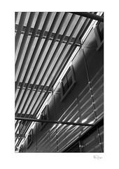 Gallery (radspix) Tags: contax rts 50mm carl zeiss planar t f17 kentmere 100 pmk pyro