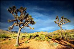 Changing weather (Sandra Lipproß) Tags: weatherchange rain sun clouds shadows joshuatree national park california landscape outside outdoor sky travel nature trees tree desert usa united states westcoast