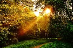 Morning light (prokhorov.victor) Tags: утро лес природа лето свет лучи солнце пейзаж