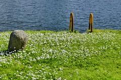 Sommer (bhermann.hamburg) Tags: trollhättan schweden sweden wasser water gänsebluemchen stein stone daisy