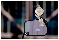 Bird in my camera (mkumar.photographer001) Tags:
