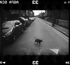 Film Scans 2019 06 08 (Sibokk) Tags: uk film photography scotland edinburgh largeformat leica 35mm m2