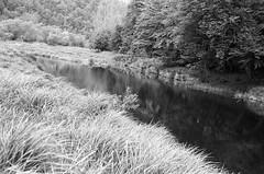 Altenburg (Harald Reichmann) Tags: altenburg kamp fluss wasser natur analog film olympusom4