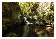 El Cedro (yoni103) Tags: canarias cano5dmarkiv lucroit largaexposicion lagomera sigma sigma14mm manfrotto paisajes