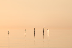 Take a rest! (karindebruin) Tags: nederland netherlands zonsondergang beach lucht sea strand structuren structures water wolken zee vogel bird fishingpoles visstokken sky