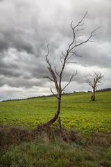 8th June (Keith Midson) Tags: launceston tree farm tasmania riverside clouds sky