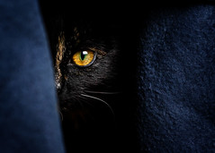 Mimi luring (patrick_illhardt) Tags: tortie cat tortiecat black red cateyes animal pet animalphotography tierfotografie artificial light