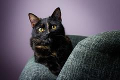 Mimi (patrick_illhardt) Tags: tortie cat tortiecat black red cateyes animal pet animalphotography tierfotografie artificial light