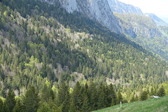 Forest @ Hike around Roc de Four Magnin (*_*) Tags: lathuile sourcesdulacdannecy 74 hautesavoie france europe trail randonnee nature montagne mountain hiking afternoon may bauges spring printemps 2019 sentier walk marche annecy savoie