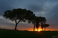 Sunrise in Tuscany (Johan Konz) Tags: sky italy tree sunrise landscape nikon outdoor tuscany clouded 7500 torrenieri