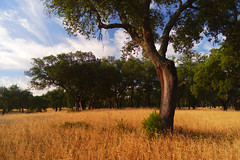MONTADO (Capturedbyhunter) Tags: fernando caçador marques fajarda coruche ribatejo santarém portugal pentax k1 smc pentaxf 28mm f28 smcpentaxf28mmf28 montado landscape waterscape paisagem