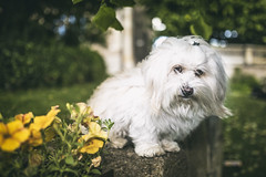 Dog Shooting (Wutzman) Tags: dog dogshooting hund wutzman wallpaper wutzmanfotografie wutzmanphotography