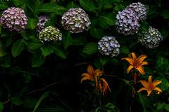 DSC_6028-3 (Manbow3) Tags: flower metallic flowers