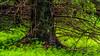 Niinisaari, East-Helsinki 🌴🌴 (Esa Suomaa) Tags: helsinki finland suomi green forest oldforest trees tree saveourtrees planetearth path trail scandinavia europe summer olympusomd
