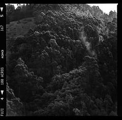 Skyline Blvd View (Graham Gibson) Tags: hasselblad 503cx 500 series v system film medium format 120 6x6 fuji fujifilm acros 100 bw black white