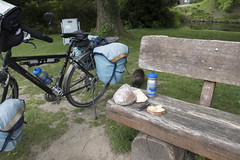 3-day bike touring microadventure Steyl (Kitty Terwolbeck) Tags: bruggen germany animals myocastorcoypus urban beverrat nutria coypu rodent knaagdier lunch lunchtime wildlife