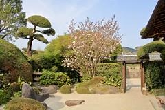 Chiran Samurai Residence Garden (Bakuman3188) Tags: chiran samurai residence garden japan minamikyushu kagoshima strase street 知覧麓庭園 日本 南九州市 鹿児島 道 canon80d canon travel 旅行 nature natur 自然