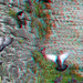 Birds City-walls Boulogne 3D