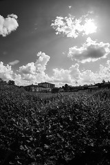 X-T2 2019-06-08 007 (linebrell) Tags: 7artisans 75mm fisheye monochrome outdoor