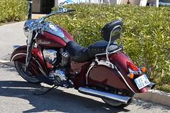 INDIAN Springfield - 2016 (SASSAchris) Tags: indian springfield moto américaine europeanlemansseries 111 htttcircuitpaulricard httt htttcircuitducastellet ricard castellet circuit