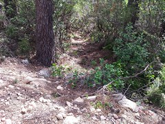 Operata1906080015 (Corse sauvage) Tags: operata opération operatadu08062019 cavu luviu ancienchemindeluviu luvviu piste pistedeluviu démaquisage tronçonneuse nettoyage ratissage