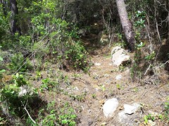Operata1906080011 (Corse sauvage) Tags: operata opération operatadu08062019 cavu luviu ancienchemindeluviu luvviu piste pistedeluviu démaquisage tronçonneuse nettoyage ratissage