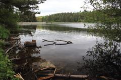 Beecraigs Country Park, Scotland (Paul Emma) Tags: uk scotland lothian linlithgow beecraigscountrypark beecraigs countrypark loch lake