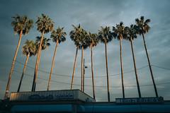 Cannes (sémaphore) Tags: france leica leicaq q palm palmier croisette sunset vsco cannes french riviera