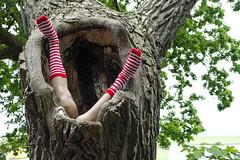 Man-Eater Tree  - Shit Happens (RadarO´Reilly) Tags: tree feet legs humor humour baum beine füse socks socken kannibale cannibal ogre maneater