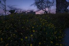 Ashkelon, Israel. (lolita.khlynina) Tags: travel flowers blue sunset sky sun plant flower history nature beautiful grass evening israel spring view fortress excavations ashkelon ישראל אשקלון
