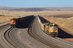 ACe race (Moffat Road) Tags: unionpacific bnsf coaltrain emd sd70ace 8469 powderriverbasin orinline train locomotive track bill wyoming railroad wy loganhill