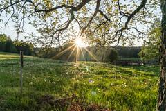 Weidelandschaft in der Abendsonne (uschmidt2283) Tags: christes frühling jahreszeiten licht sonne wiese wolken a7riii