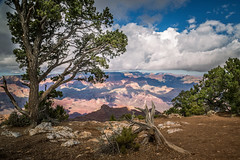 Along The Edge (Brad Prudhon) Tags: 2018 arizona grandcanyon nationalpark october southrim