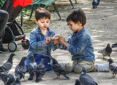 feeding pigeons (albyn.davis) Tags: children boys pigeons birds travel portrait color blue park food