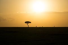Golden Horizon (BikerBoy33) Tags: kenya sunset landscape african safari gazelle wildebeest masai mara maasai silhouette travel sony alpha a6000