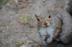 150 Hello Squirrel (Conanetta) Tags: