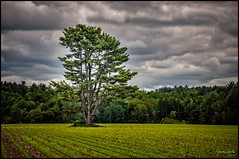 Le solitaire ... The solitary (Jeanluc Verville) Tags: arbres trees stevictoiredesorel