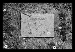 Victims of forced labour (3rd Reich) (SurfacePics) Tags: blackandwhite blackwhite bw sw einfarbig monochrome schwarzweis samuelrosenberg jüdisch juden jude jewish jewishmemorial slaveworkers forcedlabour zwangsarbeit zwangsarbeiter victim opfer salzgitter jammertal niedersachsen lowersaxony deutschland germany europe europa friedhof cemetery warcemetery gedenkstätte memorial monument ostarbeiter gräber grab kriegsgräberstätte drittesreich rüstungsfabrik reichswerke reichswerkehermanngöring ael arbeitserziehungslager nsverbrechen nazigermany crime juni 2019 surfacepics outdoor historical historisch history geschichte denkmal gedenkstein amazing stunning kriegswirtschaft stille grave graveyard gravestone massgrave massengrab tumblr instagram sonyalpha77ii exploration ost verschleppt