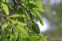 Almond tree in spring (Landahlauts) Tags: agricultura almendra almendro almondtree andalousie andalucia andalusia andalusianvillage andalusie andaluzio andaluzja arbol comarcadeguadix comarcadelaaccitania cultivo fruto fujifilmxt1 fujinonxf18135mmf3556rlmoiswr laaccitania lapeza losvillares pedania photolanda puebloandaluz sierraarana tree color