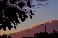 Inclined (mmichalec) Tags: sky cloud clouds poland gdańsk tricity trójmiasto evening niebo chmura chmury inclined latarnie leaves fujifilm