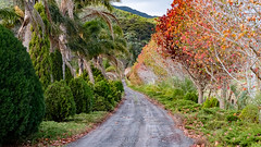 Rural road on Coromandel, New Zealand (Krokozund) Tags: cormandel newzealand northisland landscape road autumn