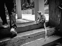 en passant par KL (Jack_from_Paris) Tags: p1000336bw panasonic dmcgx8 monochrome mono bw noiretblanc raw mode dng lightroom rangefinder télémétrique capture nx2 lr wide angle kl kuala lampur batu caves tourisme touristes voyage travel temple monkey singe nature marches stairs basket sneaker adidas